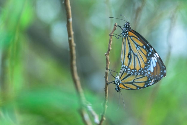 Selective focus shot of beautiful butterflies sitting on a stick