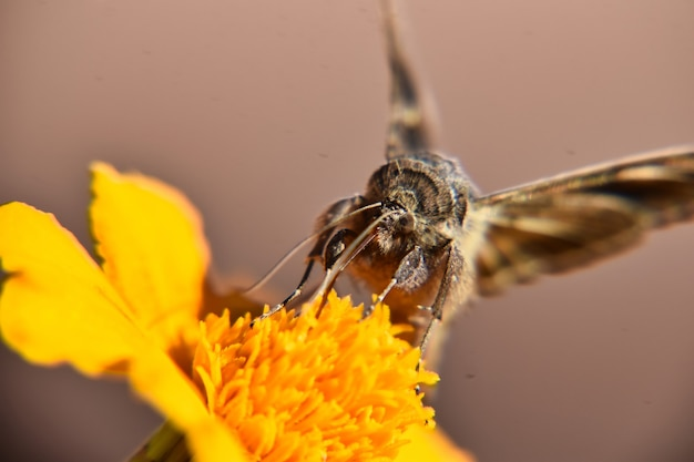 Selective focus shot of a beautiful butterfly perched on bright yellow flower