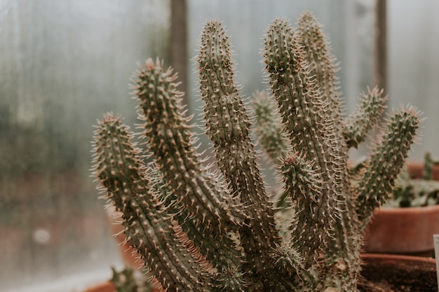 Selective focus shot of beautiful cactuses in the daylight