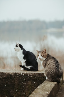 Selective focus shot of beautiful cats on a stone surface