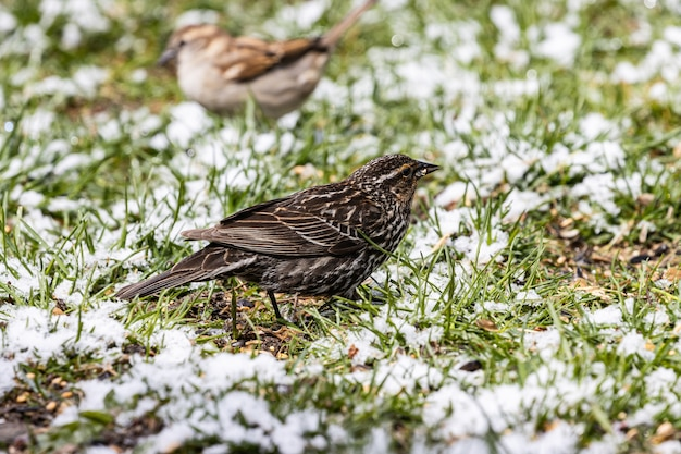 Selective focus shot of a beautiful small sparrow sitting on the grass-covered field