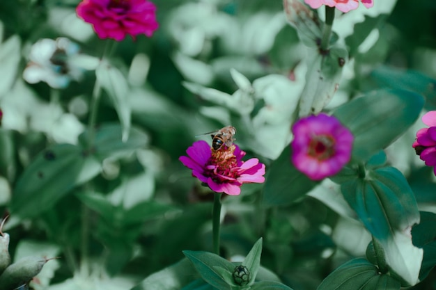 Selective focus shot of a bee on a purple flower