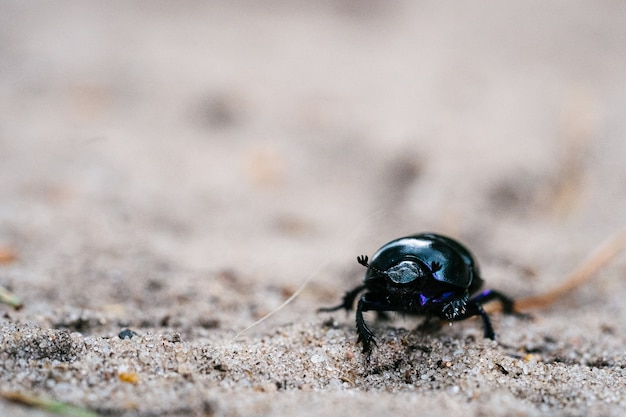 Selective focus shot of a beetle walking on a sandy meadow in a dutch forest