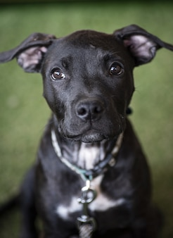Selective focus shot of a black puppy staring