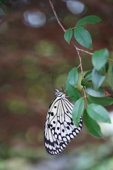 Messa a fuoco selettiva della farfalla in bianco e nero appollaiata su una foglia verde