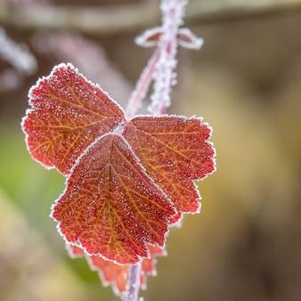 Colpo di messa a fuoco selettiva di un ramo con belle foglie rosse di autunno