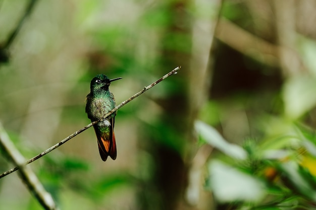 Selective focus shot of a bright green hummingbird perched on a branch