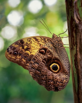 Selective focus shot of the brown camouflaging butterfly on a tree trunk