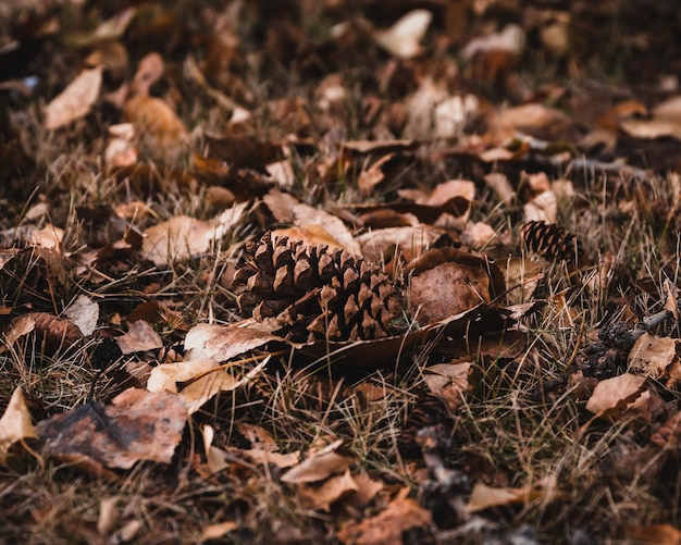 Selective focus shot of brown leaves and cones on the ground