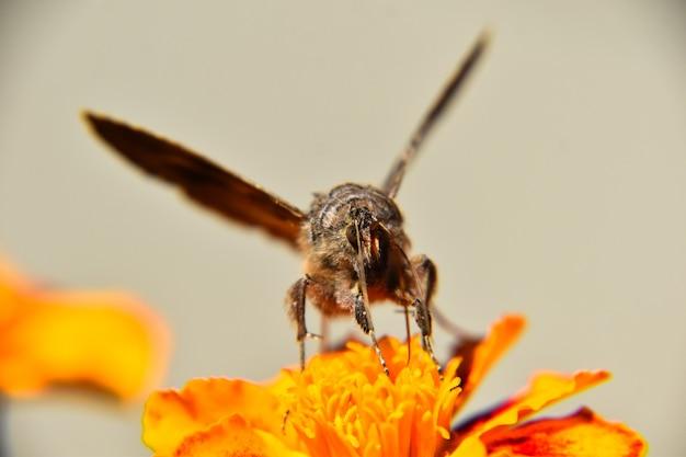 Messa a fuoco selettiva di una farfalla sul bellissimo fiore giallo