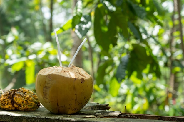 Selective focus shot of coconut water Free Photo