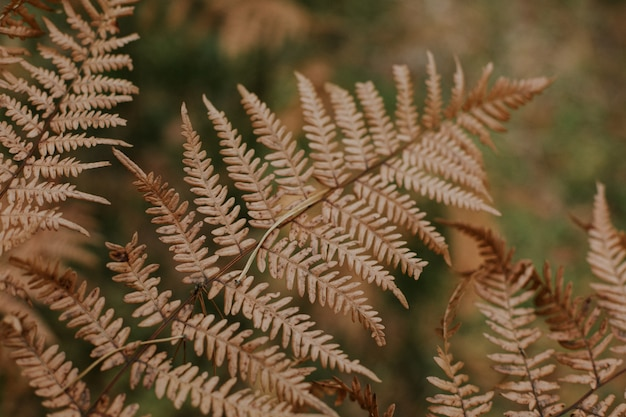 Selective focus shot of a couple of dry ostrich fern branches on a blurred background