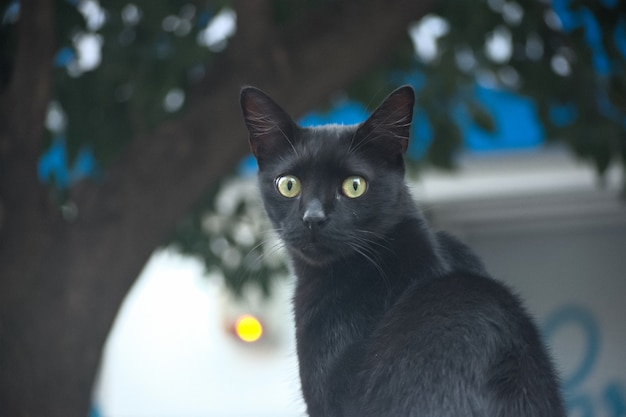 Selective focus shot of a cute black car with beautiful green eyes