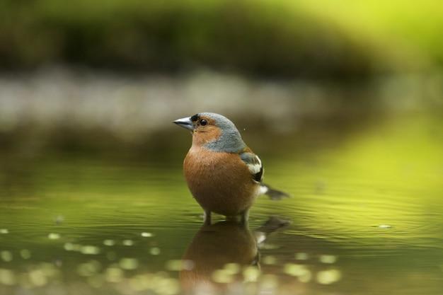 Selective focus shot of a cute finch bird
