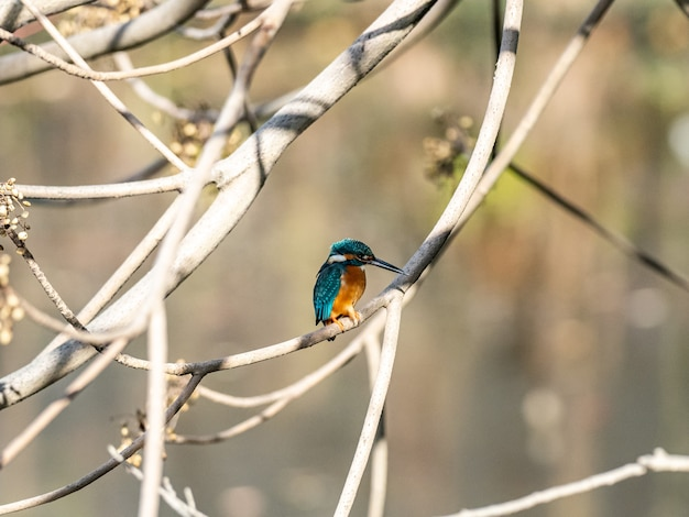Selective focus shot of a cute kingfisher sitting on a tree branch