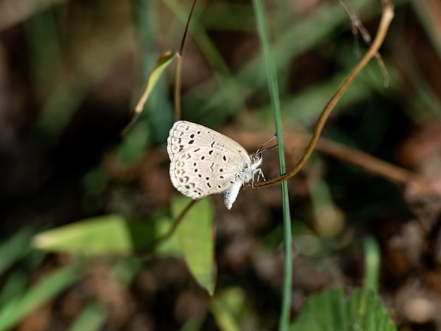 Selective focus shot of a cute pale grass blue butterfly sitting on a twig