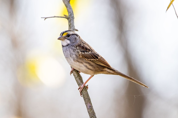 Selective focus shot of a cute sparrow perched on a branch