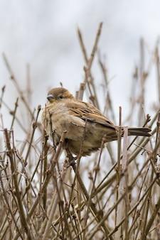Messa a fuoco selettiva di un simpatico passero appollaiato su un ramoscello