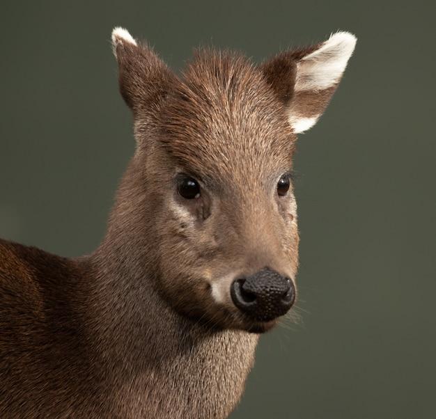 Colpo di messa a fuoco selettiva di un cervo