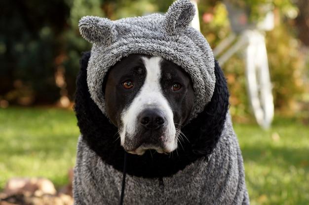Colpo di messa a fuoco selettiva di un cane vestito con un maglione invernale grigio