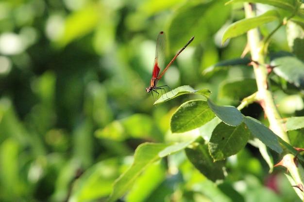 Messa a fuoco selettiva di una libellula appollaiata su una foglia verde