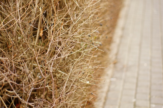 Selective focus shot of dried plants and grass near the sidewalk