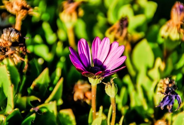 Colpo di messa a fuoco selettiva di un fiore viola esotico circondato da piante sotto la luce del sole