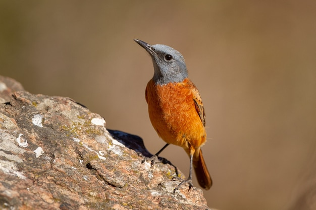Selective focus shot of an exotic small bird on the trunk of a tree on a sunny day