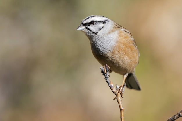 Selective focus shot of an exotic sparrow sitting on a thin branch of a tree