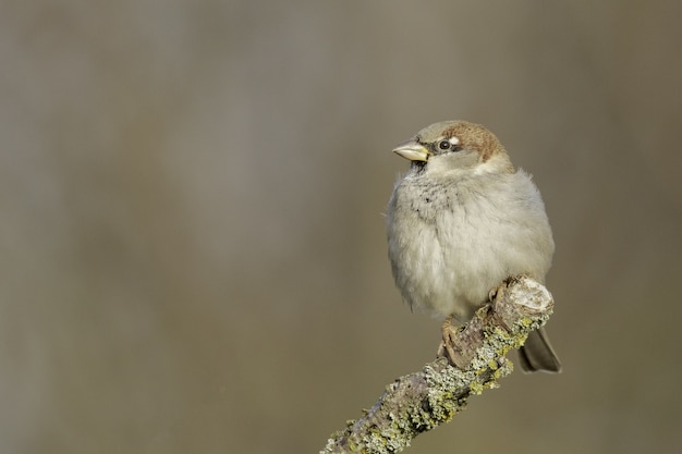 Selective focus shot of a field sparrow perched on a branch
