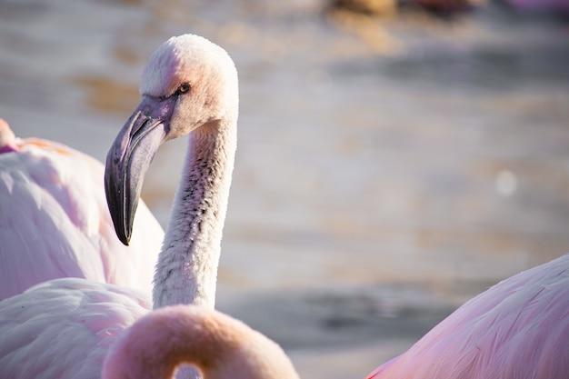 Selective focus shot of a flamingo head under the sunlight