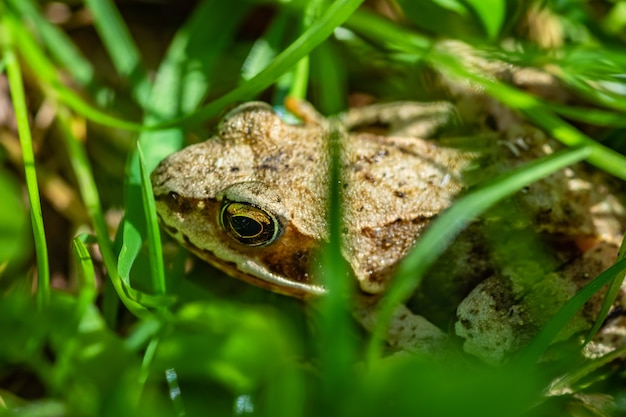 Selective focus shot of a frog in the middle of grass