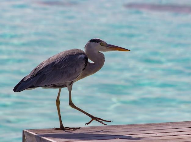 Selective focus shot of a gray heron on a pier