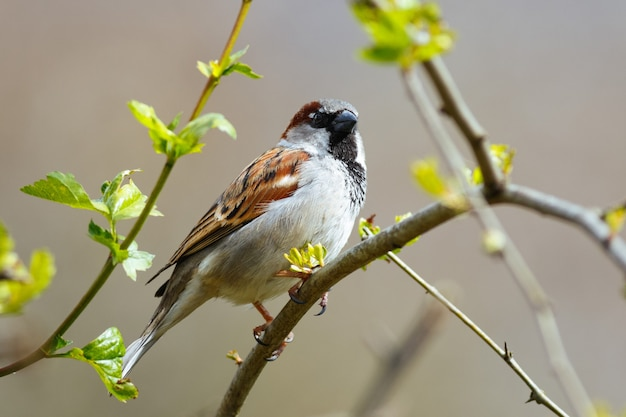 Selective focus shot of a house sparrow perched on a branch