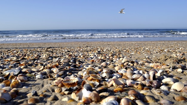 Selective focus shot of hundreds of shellfish on the beach