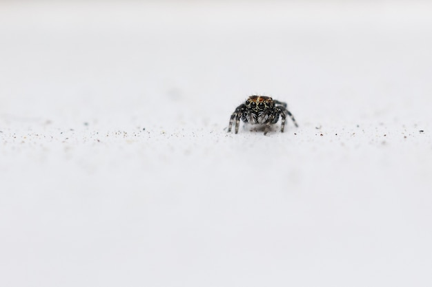 Selective focus shot of a jumping spider