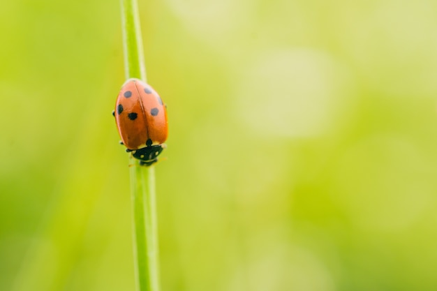 Selective focus shot of a ladybird beetle on a plant in a field captured on a sunny day