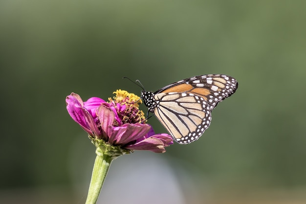 Selective focus shot of a magnificent butterfly sitting on a beautiful pink flower