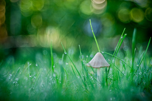 Selective focus shot of a mushroom growing in the grass captured in opole, poland