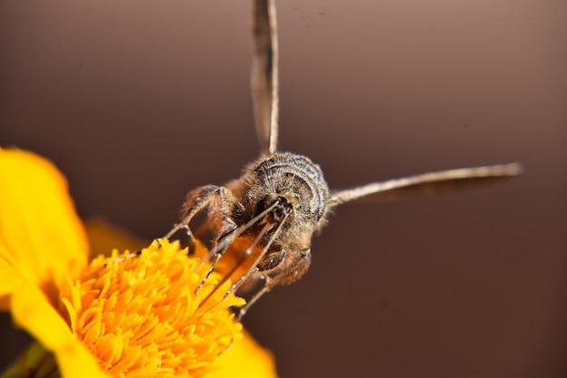 明るい黄色の花にとまる美しい蝶の選択的なフォーカスショット