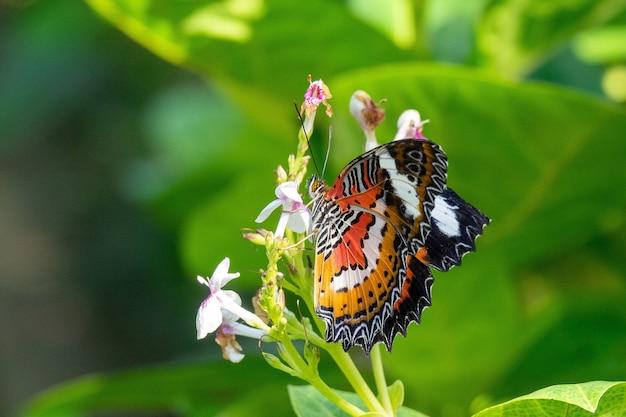 Селективный фокус снимка красивой бабочки, сидящей на ветке с маленькими цветами
