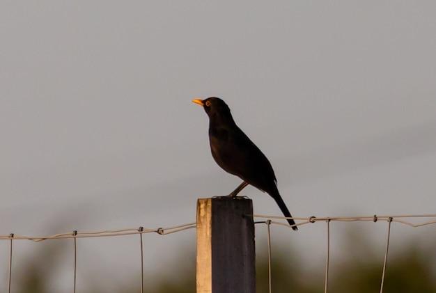 아름다운 앉은 새의 선택적 초점 샷
