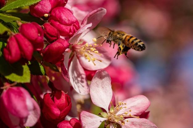 옆으로 날아가는 꿀벌의 선택적 초점 샷