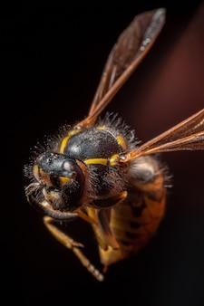 꿀벌의 선택적 초점 샷