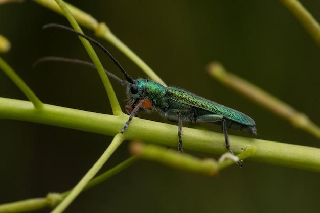 식물의 줄기에 딱정벌레의 선택적 초점 샷