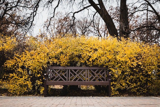 노란 잎으로 둘러싸인 벤치의 선택적 초점 샷