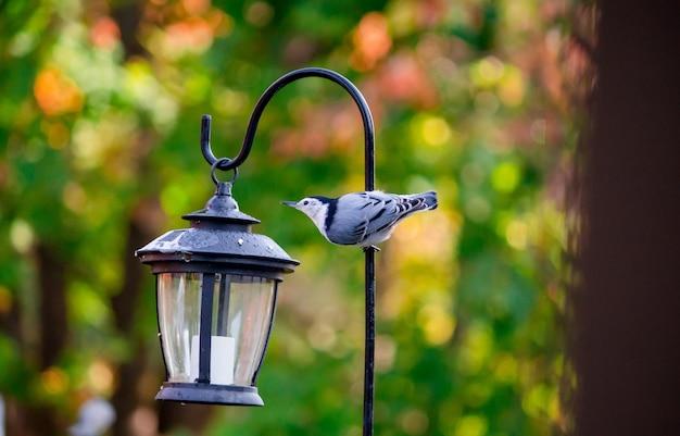 나무와 자리 잡고 새의 선택적 초점 샷