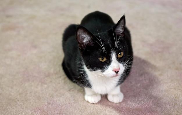 床に横たわっている黒と白の猫の選択的なフォーカスショット