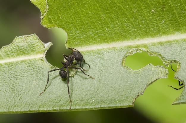 Селективный фокус выстрел из черного паука сидит на зеленых листьев и ест его