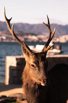 Селективный снимок коричневого лося с размытой поверхностью воды на заднем плане